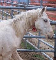 Adopt a Wild Horse Online