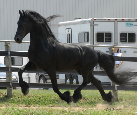 Show Horse Gallery - Anne 340