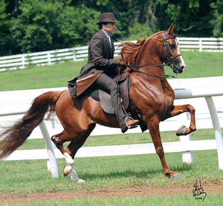 Show Horse Gallery - A Noble Cause