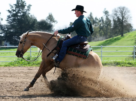 Show Horse Gallery - A Twist with Honey