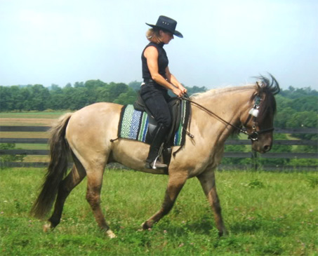Show Horse Gallery - Billy Jack