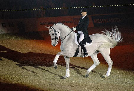Show Horse Gallery - Video of Dancing Horse, Blue Hors Matine