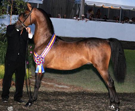 Show Horse Gallery - LNT Casanova