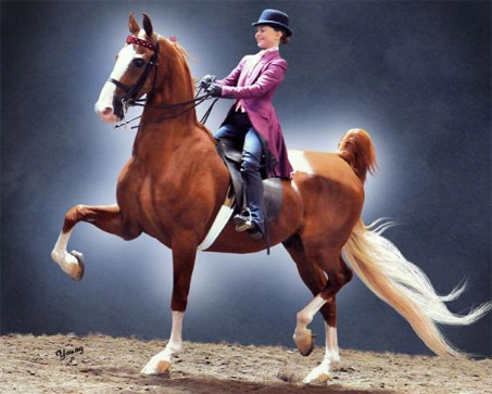 Show Horse Gallery - Champagne's Prince Charming