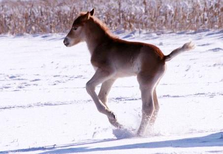 Show Horse Gallery - Cinderella SGH
