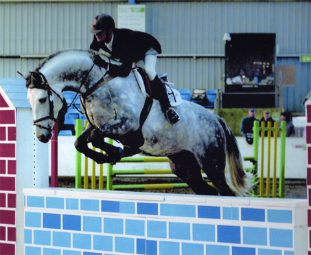 Show Horse Gallery - Crocodile Dundy Z