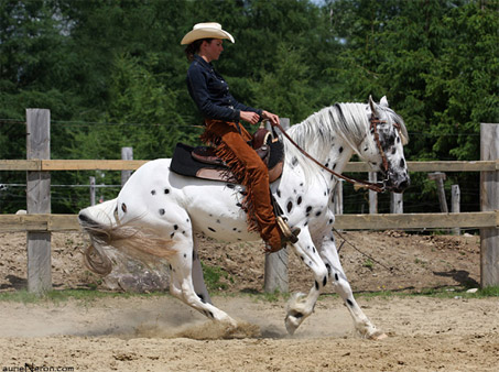 Show Horse Gallery - CTR Eagles Gold Rush