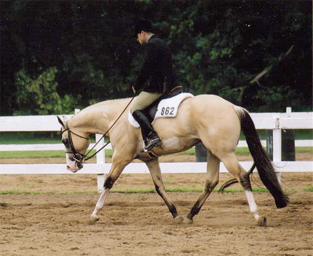 Show Horse Gallery - CW River of Gold