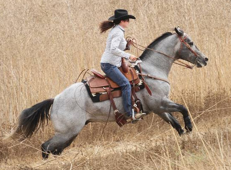 Show Horse Gallery - Dry Docs Blue Cowboy