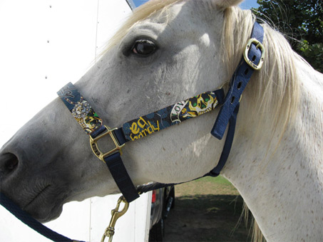 Show Horse Gallery - Ed Hardy Tack