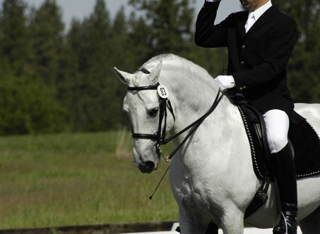 Show Horse Gallery - Favory Toscana