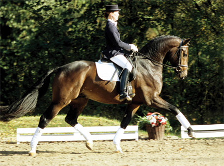 Show Horse Gallery - Fidertanz