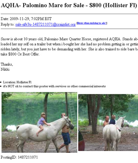 Finding Free or Cheap Horses on Craigslist - Show Horse