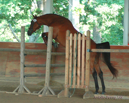 Show Horse Gallery - Foreign Affair