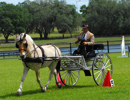 Show Horse Gallery - FRF Barnickel