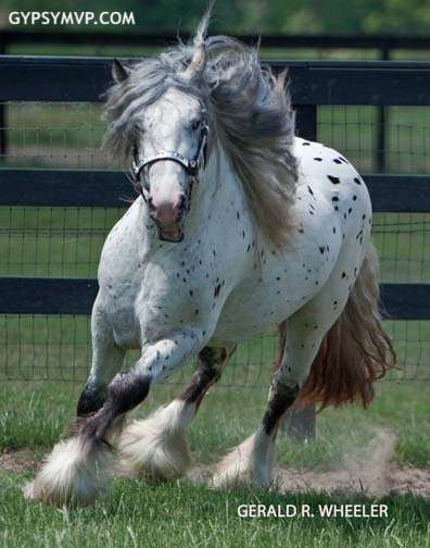 Show Horse Gallery - Ghost Rider