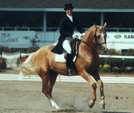 Show Horse Gallery - Glitter Please