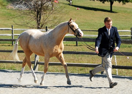 Show Horse Gallery - Gold Tycoon