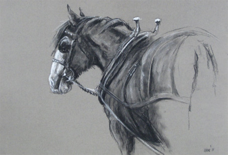 Show Horse Gallery - Equestrian Art by Heather Irvine