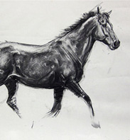 Equestrian Art by Heather Irvine