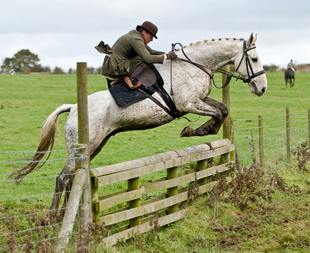 Show Horse Gallery - Sidesaddle