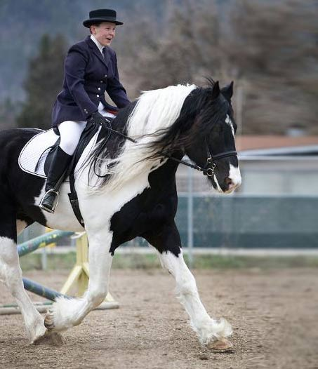 Show Horse Gallery - Hit the Jackpot
