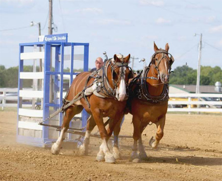 Show Horse Gallery - Horsepulling