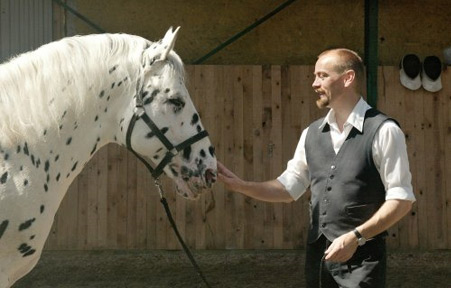 Show Horse Gallery - Hugin