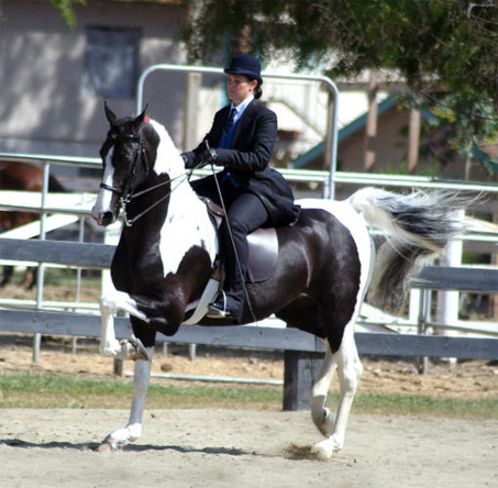 Show Horse Gallery - Just Dreamy