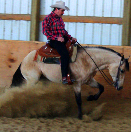 Show Horse Gallery - King Jacks Skippin