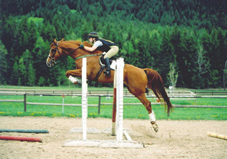 Show Horse Gallery - Leap Frog