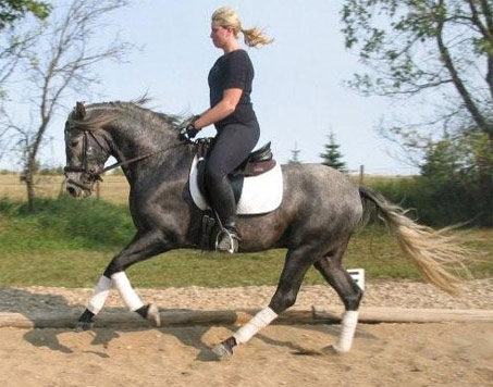 Show Horse Gallery - Ledger