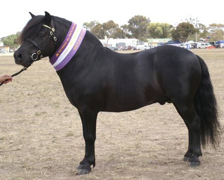 Show Horse Gallery - Lynvale Lodge Milton
