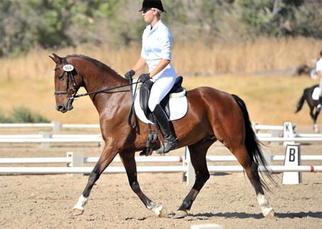 Show Horse Gallery - Maple Hills Impressive