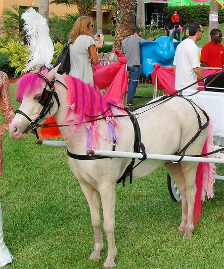 Show Horse Gallery - Miniature Dream Parties