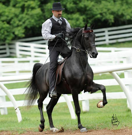 Show Horse Gallery - Mr. Ames