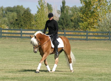 Show Horse Gallery - Nickerson SFF