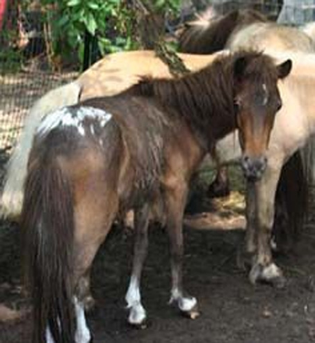 Show Horse Gallery - Oh My God Craigslist! or How Not to Be a Backyard Breeder