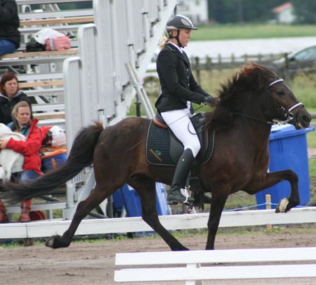 Show Horse Gallery - Oskadis