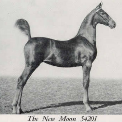 Show Horse Gallery - Using all Breed Pedigree to Research your Horse