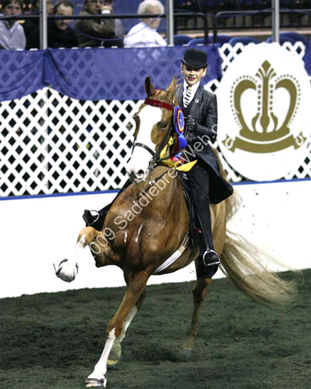 Show Horse Gallery - Platinum's New Look