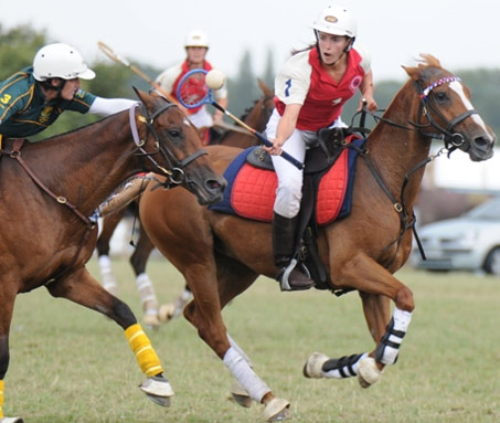 Show Horse Gallery - Polocrosse Spotlight