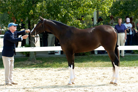 Show Horse Gallery - Popeye K