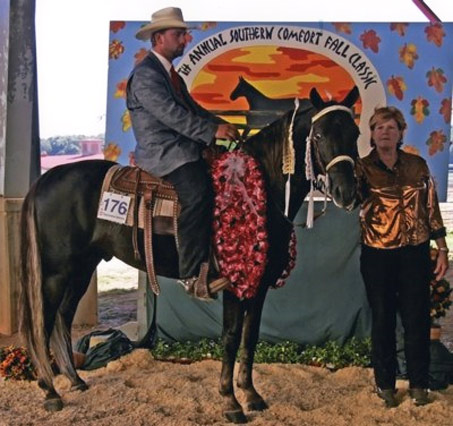 Show Horse Gallery - Prince Jester's Ridin Gold