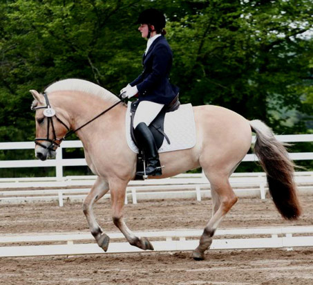 Prisco Show Horse Gallery A Different Horse Is Featured