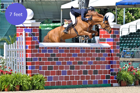 Show Horse Gallery - Puissance Jumping