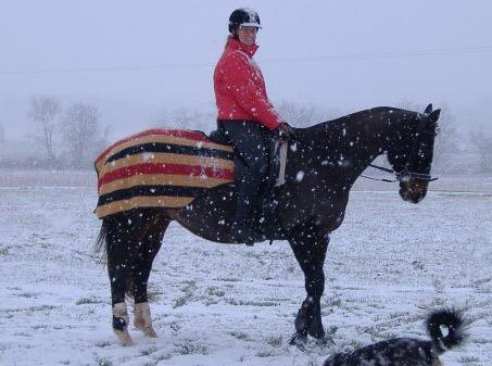 Show Horse Gallery - Rambo Newmarket Fleece