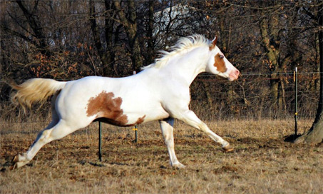 Show Horse Gallery - Rb Magics Bold Move