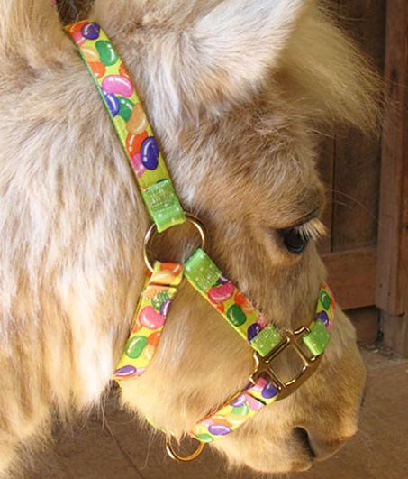 Show Horse Gallery - Red Haute Horse Halter