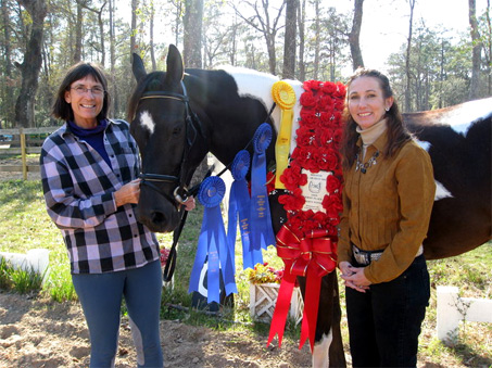 Show Horse Gallery - Royal Rogue CBA